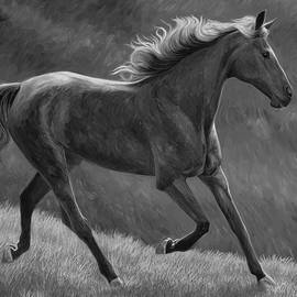Free - Black and White - Lucie Bilodeau