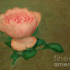 Amy Shumway - Fresco Rose