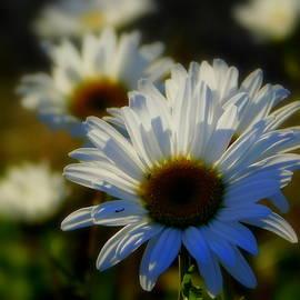 Karen Cook - Fresh as a daisy