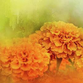 Jai Johnson - Fresh Autumn Flowers