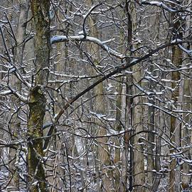 Jacqueline Milner - Fresh Spring Forest Snow
