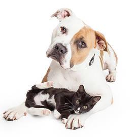 Friendly Pit Bull Dog and Affectionate Kitten - Susan Schmitz