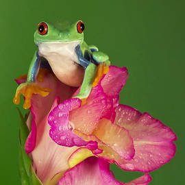 Denise Saldana - Frog on Gladiolus