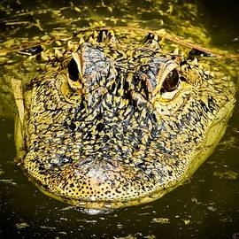 Elie Wolf - From the Series I Am Gator Number 5