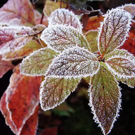 Betsy Zimmerli - Frost Cluster