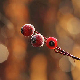 Debbie Oppermann - Frosted Rose Hips