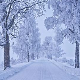 Veikko Suikkanen - Frosted trees