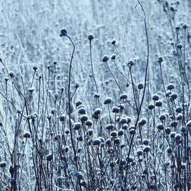 Lori Frisch - Frosted Winter Grasses