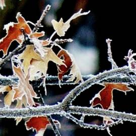 Karen Majkrzak - Frosty Branches and Leaves