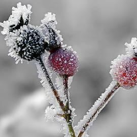 Inge Riis McDonald - Frozen buds
