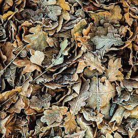 David Hare - Frozen Leaves