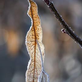 Olimpia Negura - Lime branches in winter