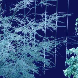 Ian  MacDonald - Frozen Silhouettes