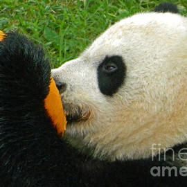 Emmy Marie Vickers - Frozen Treat For Mei Xiang The Giant Panda