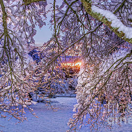 Viktor Birkus - Frozen tree.