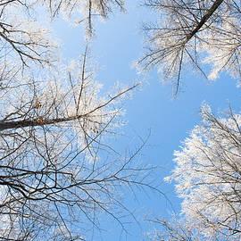 Mariana Lisina - Frozen trees
