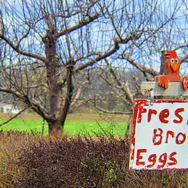 Tina M Wenger - Fresh Brown Eggs