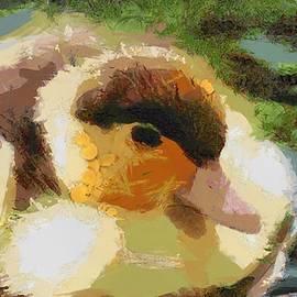 Catherine Lott - Fuzzy Duck Fragmented