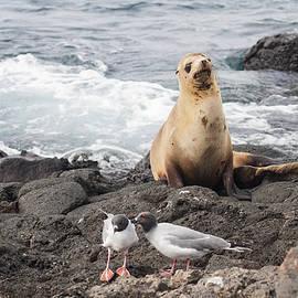 Sally Weigand - Galapagos Sea Lion Scene