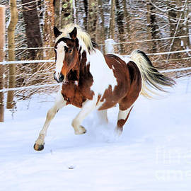 Elizabeth Dow - Galloping in the Snow