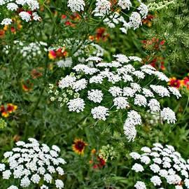 Gary Richards - Garden Flowers