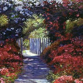 David Lloyd Glover - Garden For Dreamers