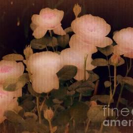 Amy Shumway - Garden Poetry