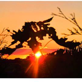 Tina M Wenger - Garden Sunset Two