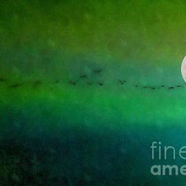Andrea Kollo - Geese in Flight