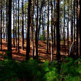 Dianne Cowen - Gentle Forest Breeze