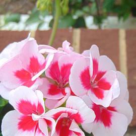 Charlotte Gray - Geranium Pink Flowers