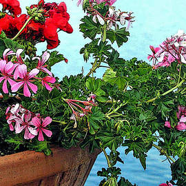 Jean Hall - Geraniums by the Sea in Ischia