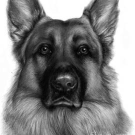 Jack Chambers - German Shepherd