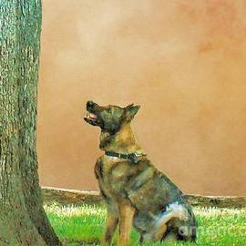 Janette Boyd - German Shepherd Waiting for Squirrel