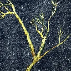 RC deWinter - Ghost Tree