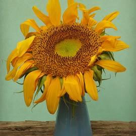 Chris Berry - Giant Sunflower Still Life on Blue