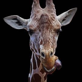 Ernie Echols - Giraffe face