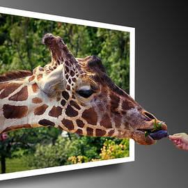 Bill Swartwout - Giraffe Feeding Out of Frame
