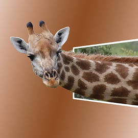 Ericamaxine Price - Giraffe Out of Box