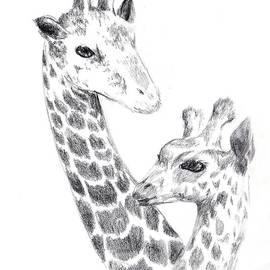 Alice Chen - Giraffes
