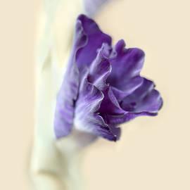 Jennie Marie Schell - Gladiola Flower Beginnings Purple