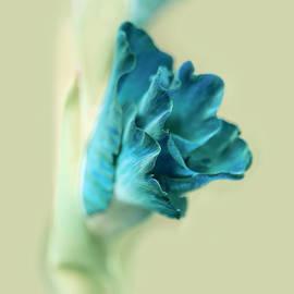 Jennie Marie Schell - Gladiola Flower Beginnings Teal