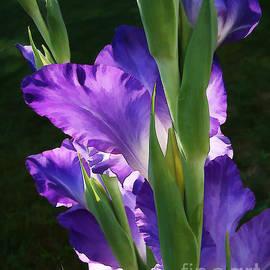 Betsy Zimmerli - Gladiola Morning