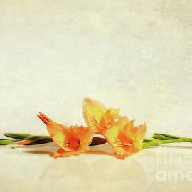 Kaye Menner - Gladioli Art by Kaye Menner