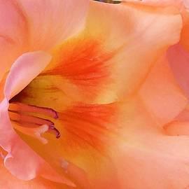 Beverly Canterbury - Gladiolus