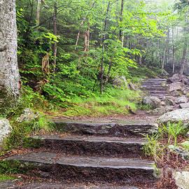 Dawna  Moore Photography - Glen Ellis Falls Trail, Jackson, New Hampshire
