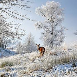 Grant Glendinning - Glen Shiel Misty Winter Deer