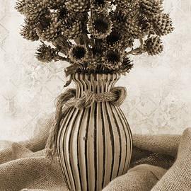 Sandra Foster - Globe Cornflower Seed Heads
