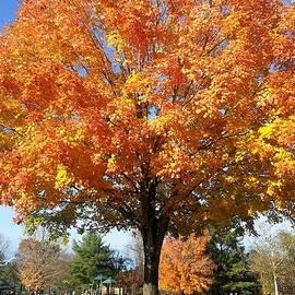 Charlotte Gray - Glorious Majestic Tree