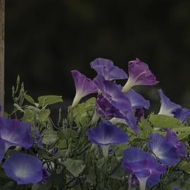 Kim Hojnacki - Glory in the Flowers